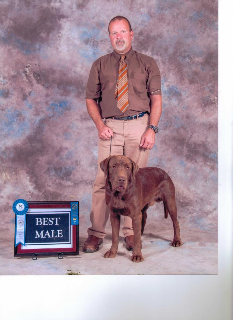Woods Ferry Kennel Raven Amp Chocolate Mousseborn November 3rd 2019forever Home December 22nd
